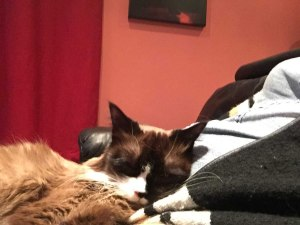 catbed3