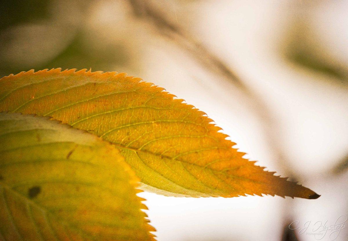 Autumn1w